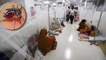 বাড়ছে ডেঙ্গু রোগী: ২৪ ঘণ্টায় ১৪৩ জন হাসপাতালে ভর্তি